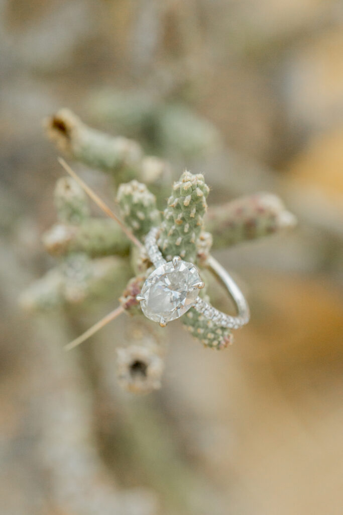 Joshua Tree Wedding with engagement ring perched on cactus